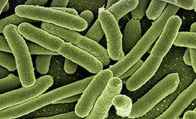Микрофлора кишечника и ожирение