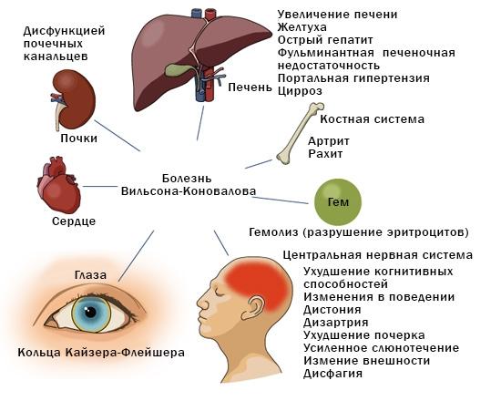 Диета при болезнях печени и желчного пузыря диета N5